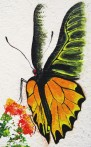common birdwing_2