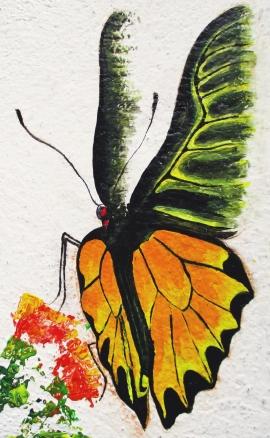 common birdwing_2
