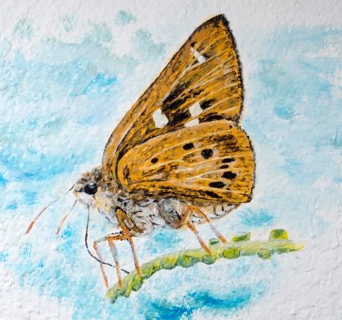 訪問「夢飛牆」發起人ankie 於地舖及舊宅地下外牆畫蝴蝶壁畫,以鼓勵公眾保育本土文化和思考公共空間的定義@PanDa Cafe 20151029 西貢 蘇智鑫攝
